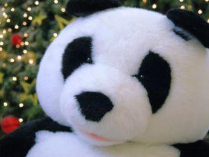 Google Panda – kdo to vlastně odnese?